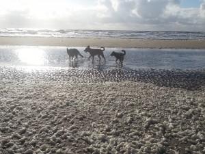 Lekkere strandwandeling met Bika Para en Finn