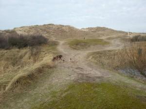 Wandelen in de duinen van Egmond